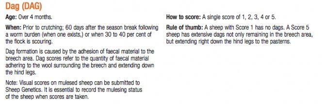 How to score dag: Source: Sheep Genetics.