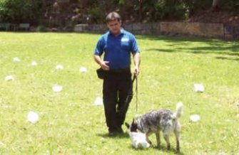 Hanrob Dog Academy Chief Dog Trainer, Wayne Grewar training one of the dogs used in the odour study. Source: DAWFA Mt Barker Breech Strike Resistance Newsletter Issue 6